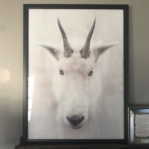 Goat Animal Decor Print